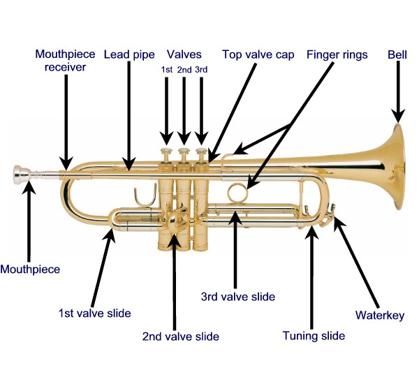 Anatomy of a trumpet